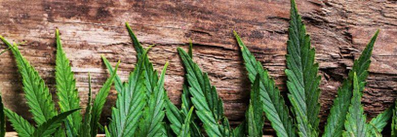 100 Percent Delivery – Medical Marijuana Delivery & Service