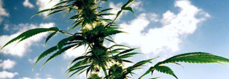 Medical Marijuana Doctors Lauderdale