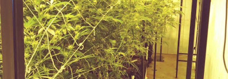 Trulieve Medical Marijuana Grow Facility