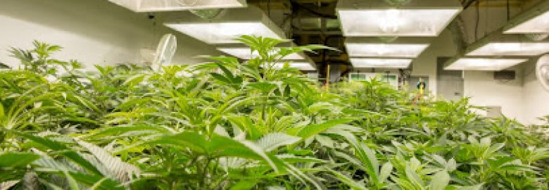 Headquarters Cannabis Company – Longmont